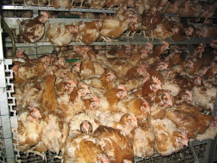 Hühnerstall Bodenhaltung