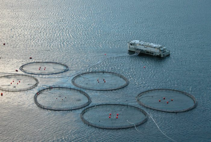 Aquakultur Fischzucht