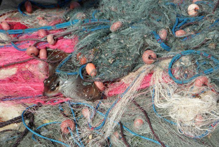 Fischernetz Beifang