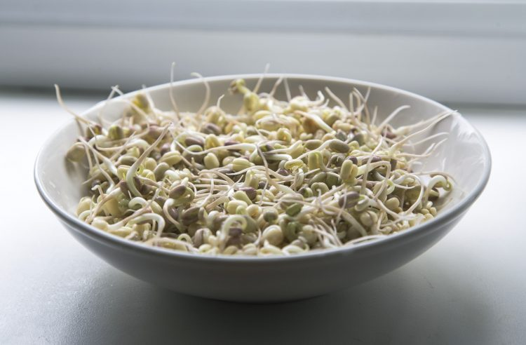 Sojasprossen Mungobohnen