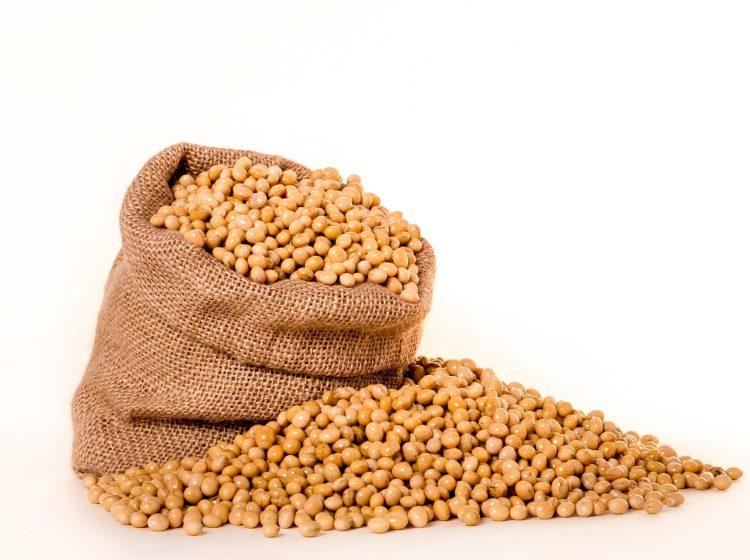 Saatgut Sojabohnen