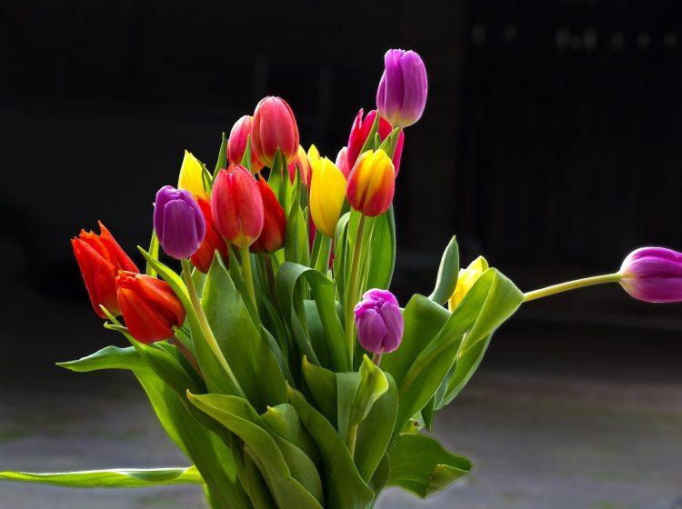 Tulpen, Blumen