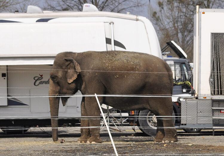 Zirkus, Elefant