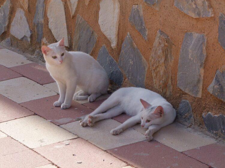 Katzen Streuner