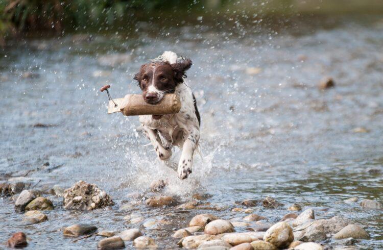 Hund Wasser