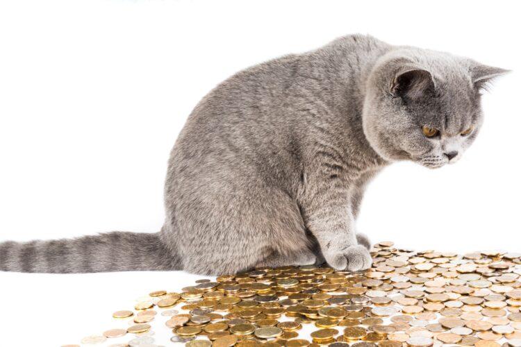 Katze Geld