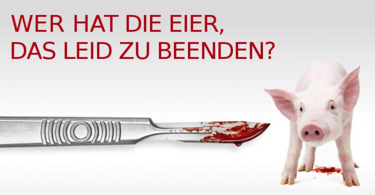 Kampagne Arme Schweine: http://armeschweine.at