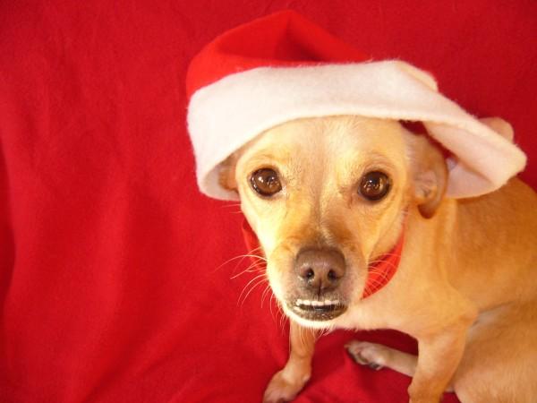Ich bin kein Weihnachtsgeschenk!