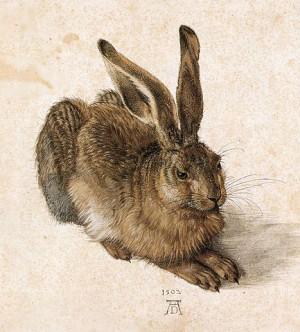 Hase von Dürer