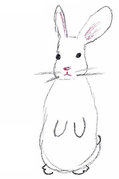 Hasen und Kaninchen - vielfältig ausgebeutete Tiere