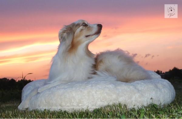 Bio-Hundebett von Dog Filou's
