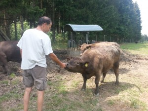 Hubert füttert seine Rinder