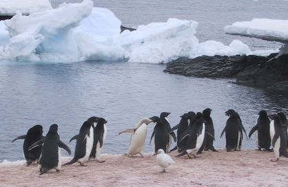 Penguins_on_Gourdin_Island