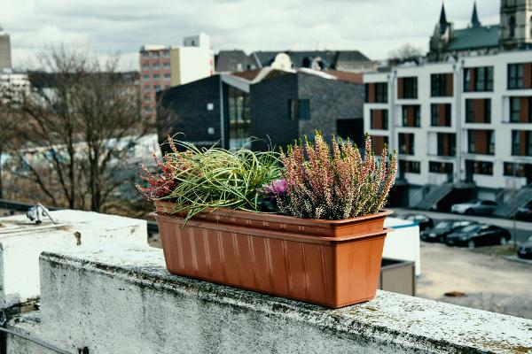 urban gardening © Wiebke Jünger