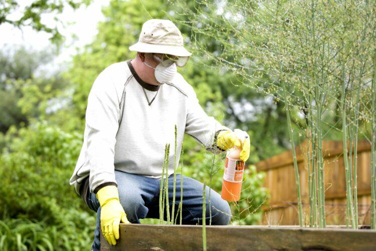 Pestizideinsatz Spritzmittel