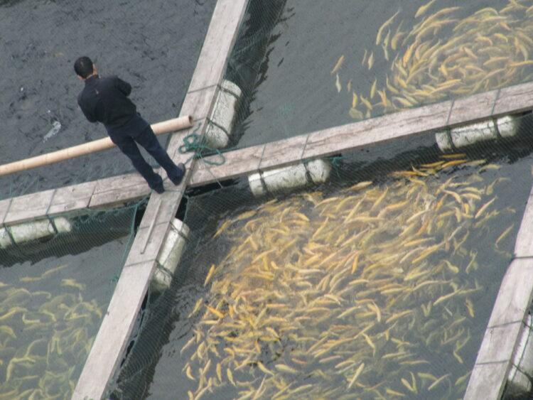 Aquakultur China