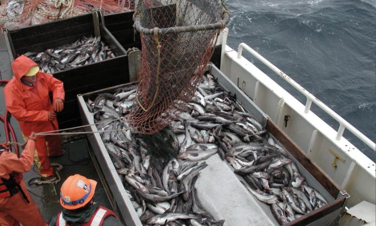 Fischfang Fischerboot