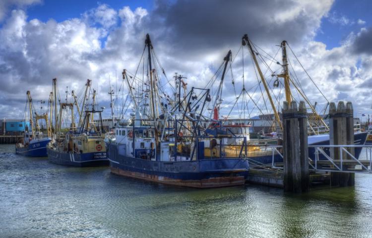 Fischfangflotte