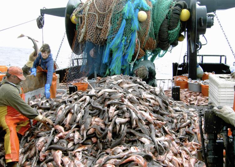 Gefangene Fische an Bord
