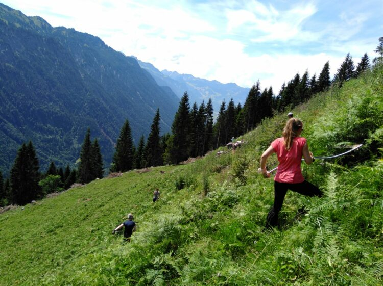 Entfernen von Adlerfarn auf einer Vorarlberger Almwiese