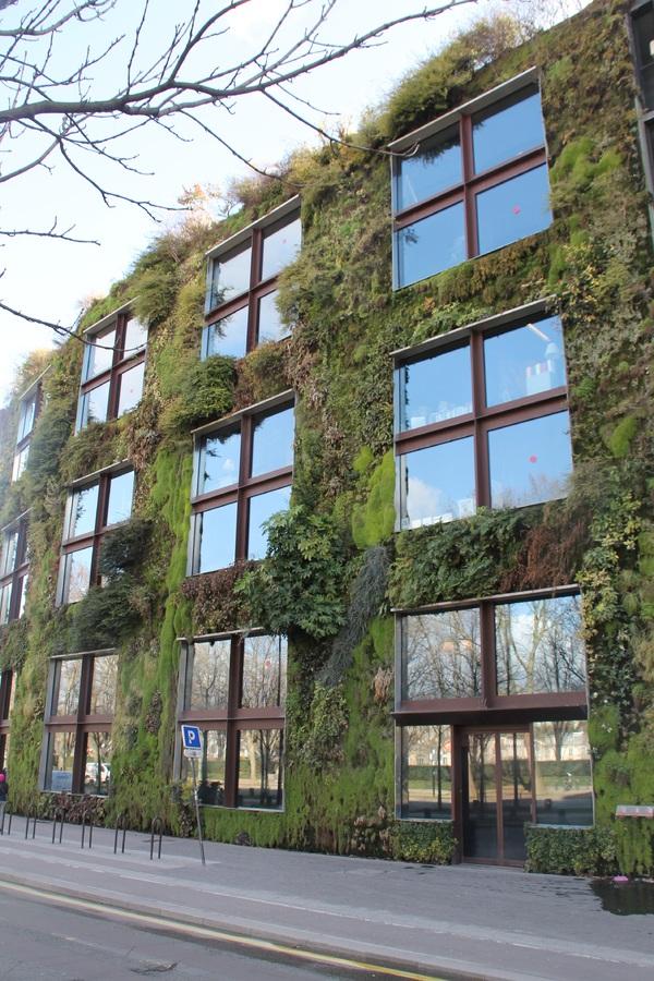 Grüne Fassade mit Moosen, Flechten, Farnen und Gräsern
