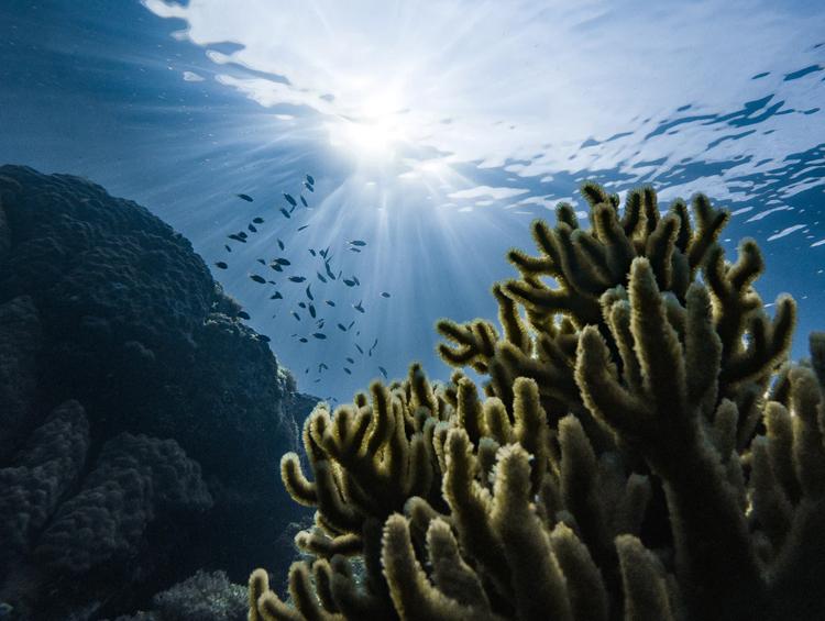 Unterwasseraufnahme mit Algen und Fischen